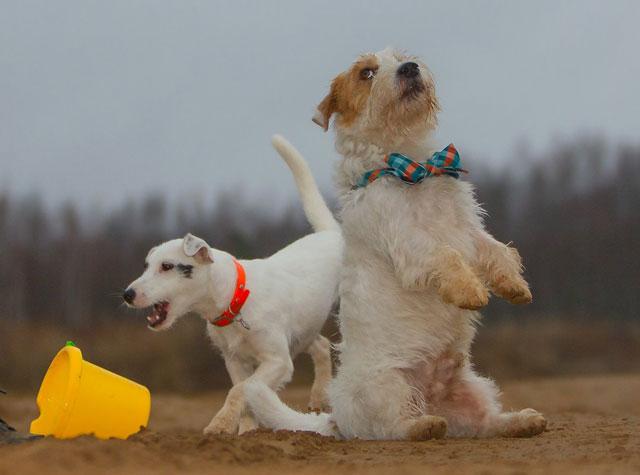 Дрессировка собак в Москве на площадке