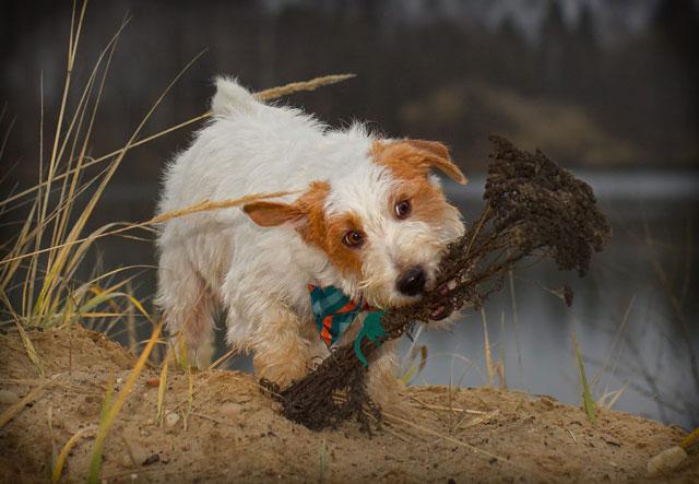 Дрессировка собак в Москве инструктор