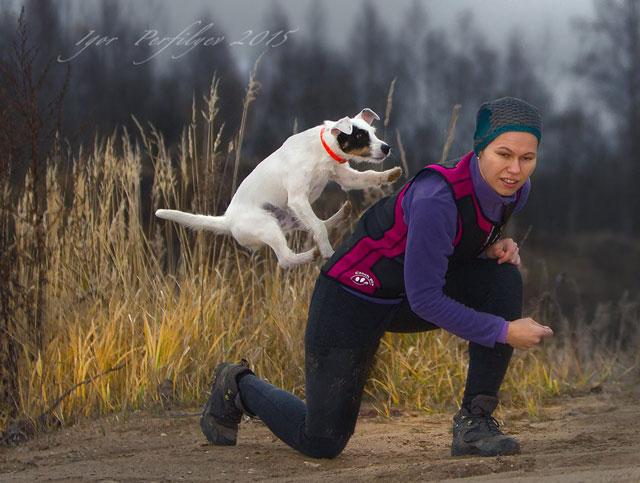 Дрессировка собак Кунцево