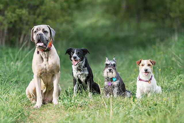 Клуб собака москва свободные люди клуб москва